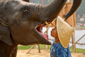 Lady Mahout & Pumpui the Elephant