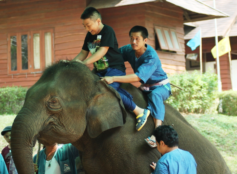 Thai Elephant Therapy Project #1