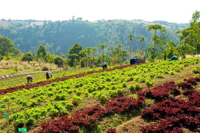 GHEB_Organic Farm 2