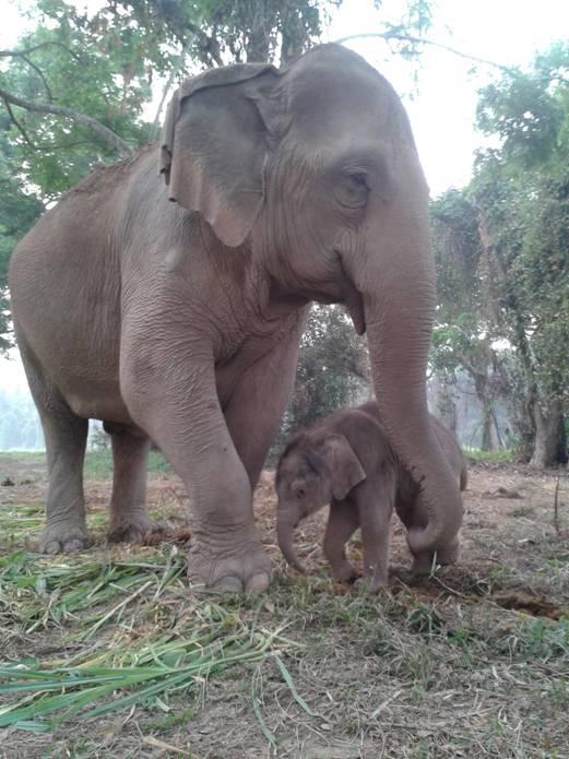 Anantara elephant day