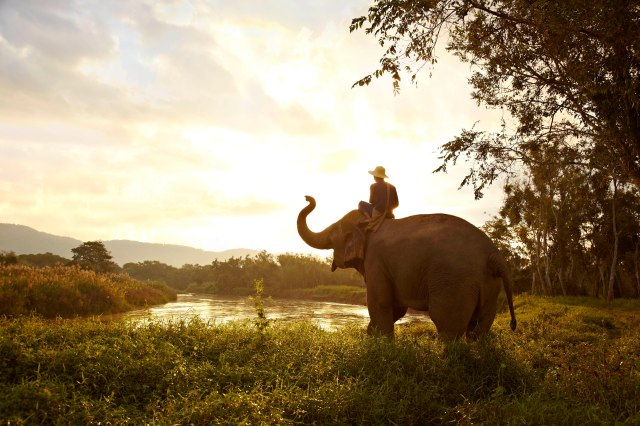 elephant_and_mahout_at_the_golden_triangle_asian_elephant_foundation